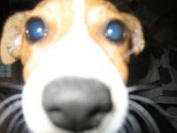 Jack Russell's Photo