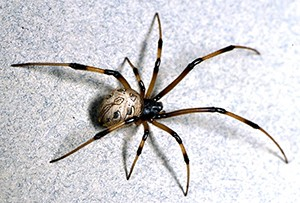 McShane is in the 18 per cent of male Arachnophonbes in the UK. ©UCR.edu